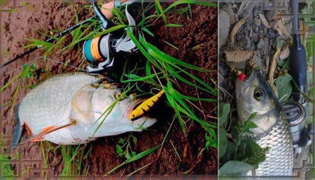Воблеры на жереха: ТОП 10 уловистых моделей, техника ловли