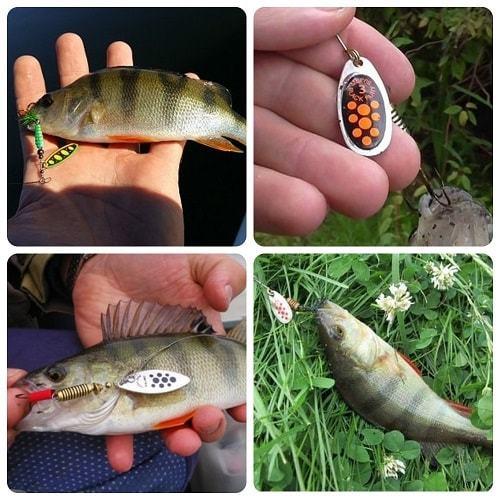 Ловля окуня на спиннинг: весна, лето, осень. Приманки и техника ловли.