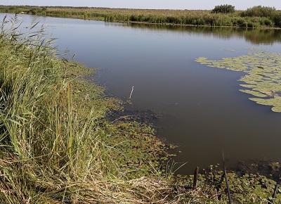 Ловля щуки на живца: как ловить с берега, поплавочная удочка