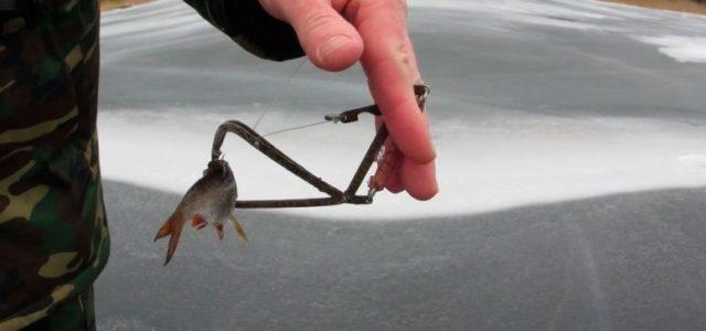 Как насаживать живца на капкан для ловли щуки, техники насадки живца