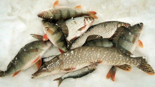Рыбалка в глухозимье – поведение рыбы и как её ловить
