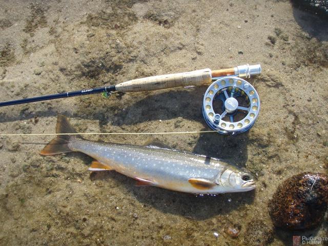 Ловля гольца на спиннинг и поплавочную удочку, на кольском полуострове