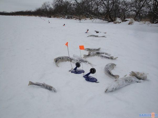 Как ловить щуку на жерлицы зимой: установки и процесс ловли