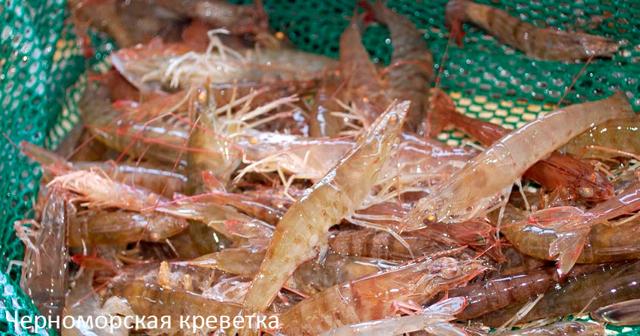 Как ловить креветок в Черном море и Азовском, способы ловли креветок