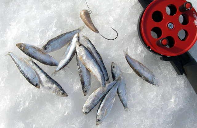 Ловля судака зимой на тюльку: оснастка, тактика ловли, снасти
