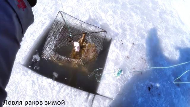 Ловля раков раколовками: техника ловли, виды раколовок