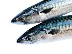 Скумбрия: польза и вред для организма, калорийность, химический состав