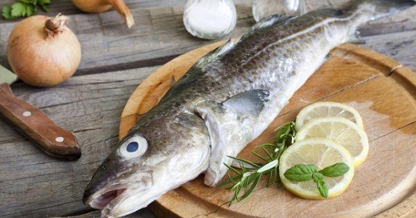 Рыба пикша: описание с фото, где водится, чем питается