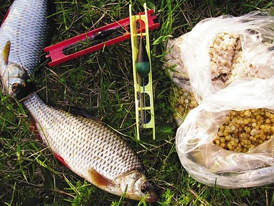 Как правильно запарить пшеницу для рыбалки, способы приготовления