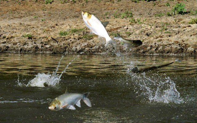 Снасти для ловли белого амура: технопланктон, пружина, поплавок