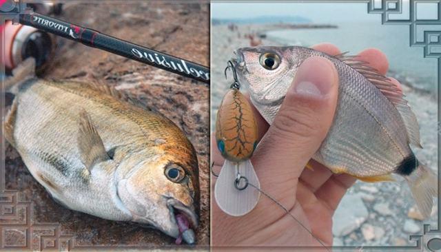 Ловля морского карася (ласкиря): на что ловить и где