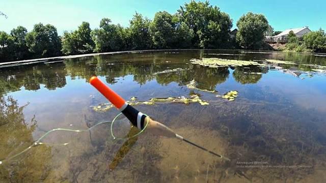Ловля карася летом на поплавочную удочку: правильная оснастка, насадки и прикормка