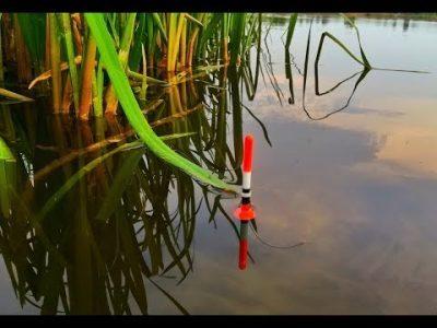 Лещ: описание рыбы, места обитания, нерест, лучший период клева