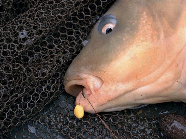 Кукуруза для рыбалки, как приготовить, ферментация