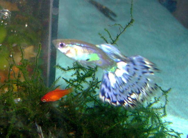 Какая память у рыб, как долго рыба может помнит