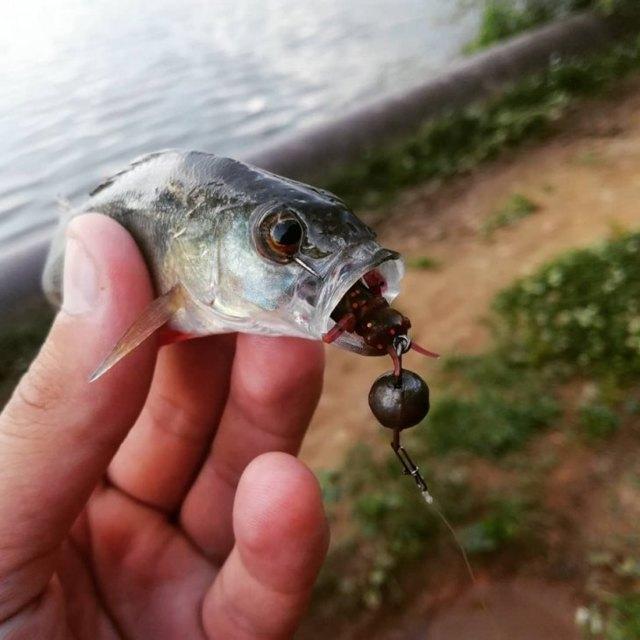 Джиговая оснастка и ее монтаж: виды джиговых оснасток, рыбалка на щуку