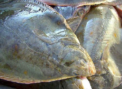 Камбала: польза и вред для организма, пищевая ценность и калорийность