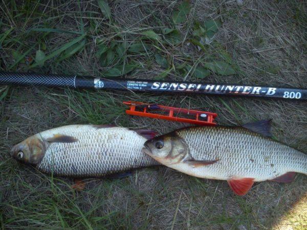 Ловля язя: на спиннинг, фидер, поплавочную удочку