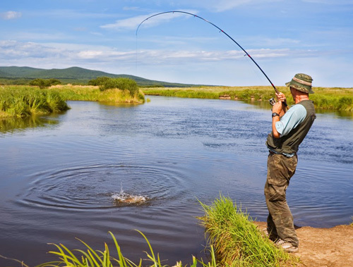 Рыба кунджа: ареал обитания, полезные свойства, рецепты приготовления