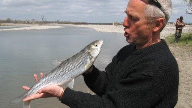 Рыба вырезуб: фото и описание, где водится, рыбалка на вырезуба