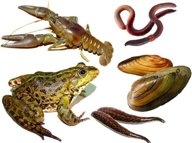 Лучшие приманки для ловли сома, животного и искусственного происхождения