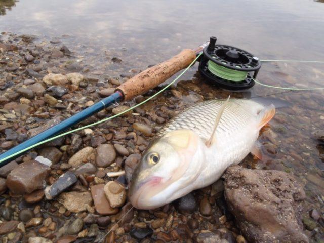 Ловля голавля на кузнечика без поплавка и с поплавком