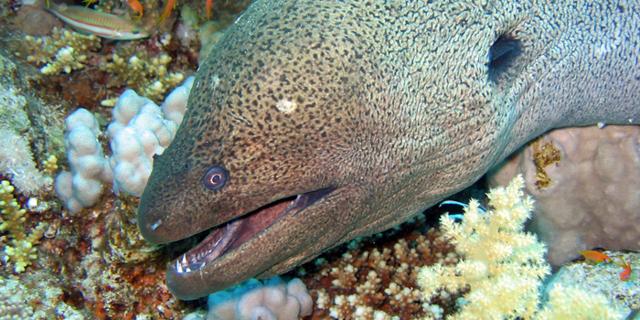 Рыбы красного моря: описание с названиями и фото, ядовитые