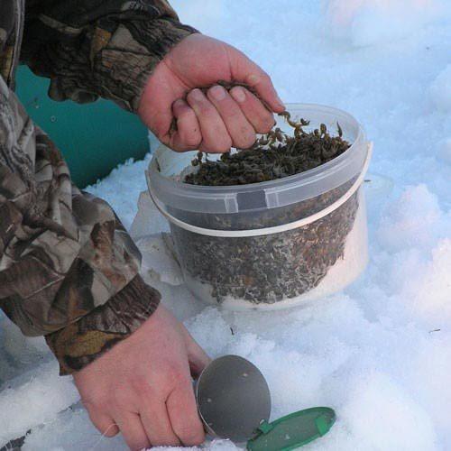 Прикормка для леща зимой своими руками: проверенные рецепты и рекомендации