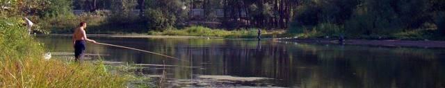 Ловля линя: где ловить, как ловить линя, на что ловить